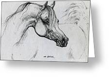 Arabian Horse Drawing 28 Greeting Card