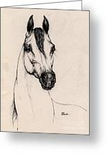 Arabian Horse Drawing 29 Greeting Card