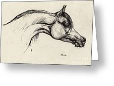 Arabian Horse Drawing 30 Greeting Card