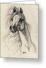 Arabian Horse Drawing 37 Greeting Card