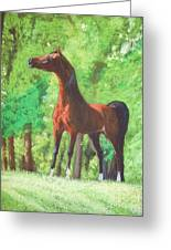 Arabian Horse In A Forest Clearing Greeting Card