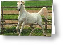 Arabian Horse Portrait In Pastels Greeting Card