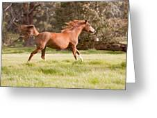 Arabian Horse Running Free Greeting Card