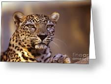 Arabian Leopard Panthera Pardus 1 Greeting Card