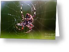 Arachnophobia Greeting Card