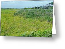 Aransas Nwr Coastal Grasses Greeting Card