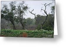 Aransas Nwr Landscape Greeting Card