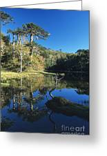 Araucaria Reflections In The Chilean Lake District Greeting Card