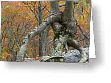 Arboreal Architecture Greeting Card