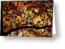 Arboretum Fall Greeting Card