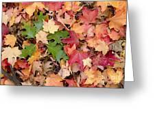 Arboretum - Oak Greeting Card