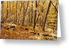 Arboretum Trail Greeting Card