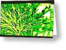 Arbres Verts Greeting Card
