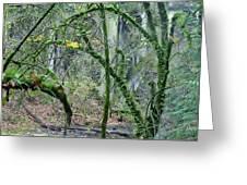 Arch  Bridge Through Trees Greeting Card