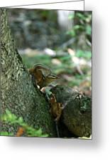 Arched Chipmunk Greeting Card