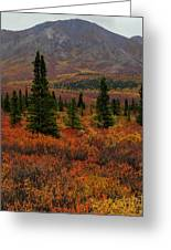 Arctic Color Greeting Card