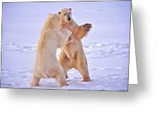 Arctic Dance Greeting Card