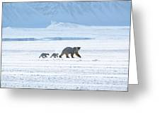 Arctic Family Greeting Card