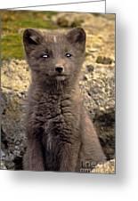 Arctic Fox Pup Alaska Wildlife Greeting Card
