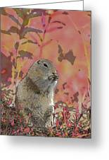 Arctic Ground Squirrel In Autumn Colors Abstract Greeting Card