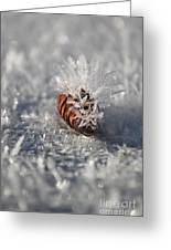 Arctic Pine Cone Porcupine Greeting Card