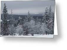 Arctic Treeline Greeting Card