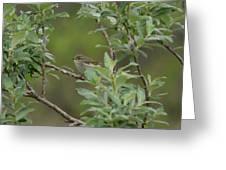 Arctic Warbler Greeting Card