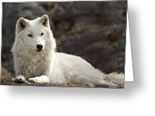 Arctic Wolf Adult Greeting Card