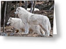 Arctic Wolf Pair Greeting Card