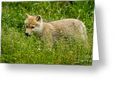 Arctic Wolf Pictures 341 Greeting Card
