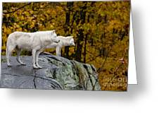 Arctic Wolf Pictures 930 Greeting Card