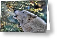 Arctic Wolf Song Greeting Card by Skye Ryan-Evans