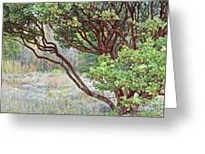 Arctostaphylos Hybrid Greeting Card