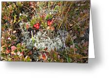 Arctostaphylos/myvatn Greeting Card