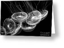 Area 51 - Moon Jellies Aurelia Labiata Greeting Card