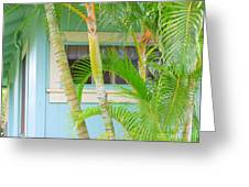 Areca Palms At The Window Greeting Card