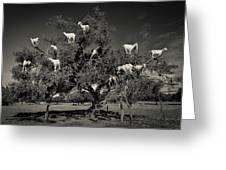 Argan Loving Goats Greeting Card