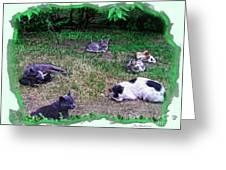 Argentina Cat Park Greeting Card