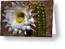 Argentine Giant Cactus Greeting Card