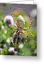 Argiope Spider And Grasshopper Vertical Greeting Card