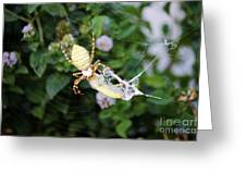 Argiope Spider Top Side Horizontal Greeting Card