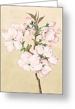 Ariake - Daybreak - Vintage Japanese Watercolor Greeting Card