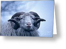 Aries Greeting Card