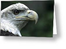 Aristocratic Bald Eagle Greeting Card