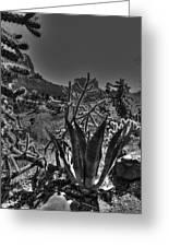 Arizona Bell Rock Valley N9 Greeting Card