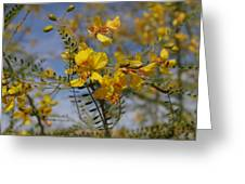 Arizona Gold Greeting Card