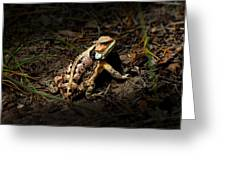 Arizona Horned Lizard Greeting Card