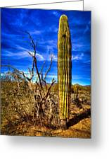 Arizona Landscape IIi Greeting Card