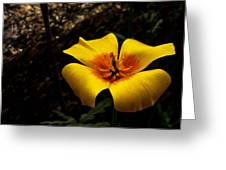 Arizona Poppy Greeting Card
