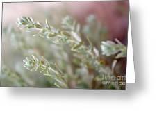 Arizona Sage Greeting Card